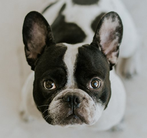 nierozpisanie-czyli-biala-kartka-patrzy-jak-ten-pies