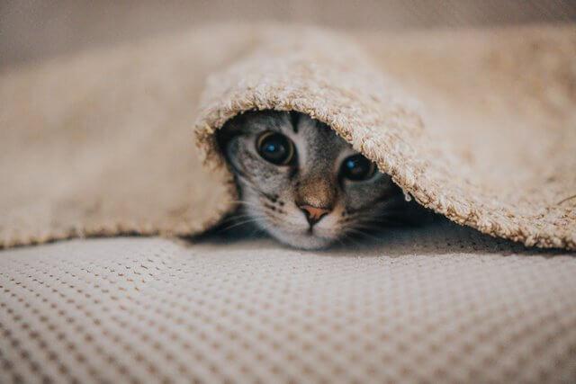wypalenie kreatywne nauczylam sie kot schowany